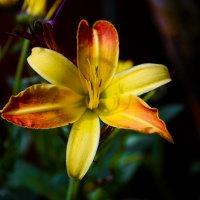 Макро цветок :: Вероника Алатырева
