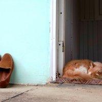 Кошки Крыма. Хозяин дома. :: Вера Литвинова