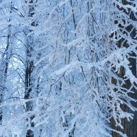 Голубой иней. Всего один день зимы :: Анатолий Кувшинов