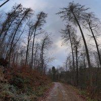 Осенние цвета :: Heinz Thorns