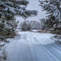 Первые шаги зимы 3 :: Андрей Дворников
