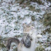 Ловит снежинок :: Вероника Алатырева