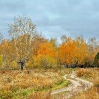 Хмурая осень :: Mikhail Irtyshskiy