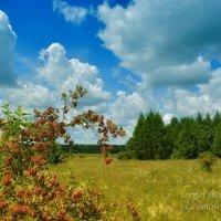 В летний день на опушке леса :: Сергей Шаталов
