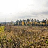 Осенние перелески :: gribushko грибушко Николай