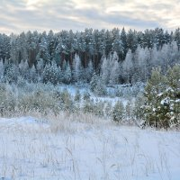 Декабрьский лес. :: Александр Зуев