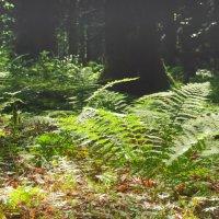 В лесу :: Денис Масленников