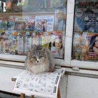 Любительница сканвордов. :: Люба