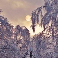 Ледяной дождь в Москве, декабрь  2010 :: Евгений Кочуров