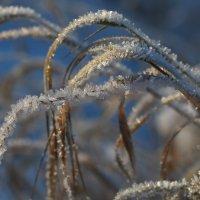 В зимних кристаллах. :: LIDIA V.P.