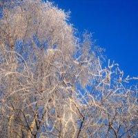 Узоры Деда Мороза на небе :: Елена Семигина