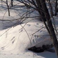 Кто разгуливал по снегу? :: Инна Драбкина