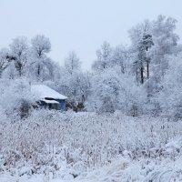 Зима :: Светлана