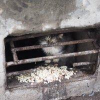 """""""Спешат в морозы всякий раз дворовые коты уйти в подполье"""" :: Ильсияр Шакирова"""