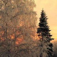 Зимний  пейзаж :: Наталья Тагирова