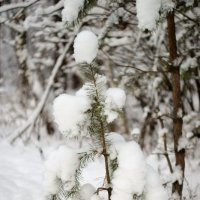 Радость новогодняя в снегу :: sorovey Sol