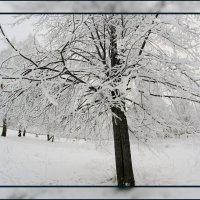 Грустная зима.... :: Александр Широнин