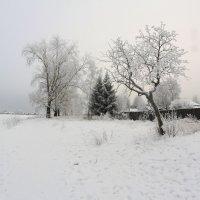 На берегу...Зима... :: Александр Широнин