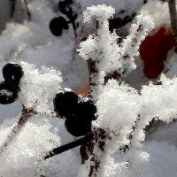 Зима кружевная :: Надежд@ Шавенкова