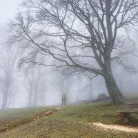 а я еду за туманом... :: Elena Wymann