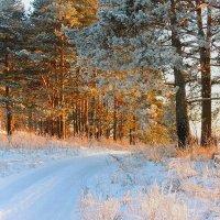 Луч солнца заплутал в лесу :: Павлова Татьяна Павлова
