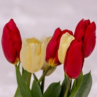 Тюльпаны :: Игорь Сикорский