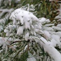 И в Ташкент пришла зима... :: Светлана