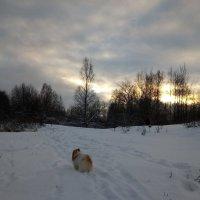 На прогулке в лесопарке :: Елена Павлова (Смолова)