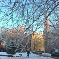Морозным днем :: Елена Семигина