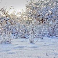 Краски зимы :: Наталья Лакомова