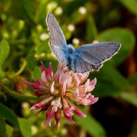 про крылатые цветы 6 :: Александр Прокудин