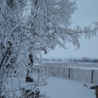 Снежные кружева :: Светлана Рябова-Шатунова