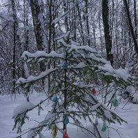 В лесу родилась елочка ... :: Лариса Корж