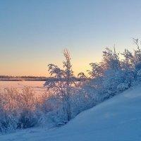 На реке Пур :: Marina Pelymskaya