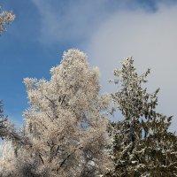Город, в который пришла зима :: Надежд@ Шавенкова