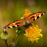 про крылатые цветы 13 :: Александр Прокудин
