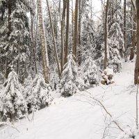 Лесными тропами... :: Анна VL