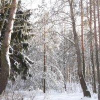 Зимний лес :: Анна VL