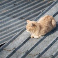Дом на продажу, кота на улицу :: Вадим