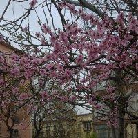 Мелодия весны :: Наталья (D.Nat@lia)