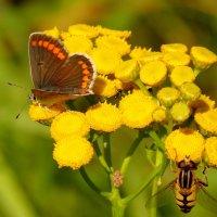 и снова бабочки 33 :: Александр Прокудин