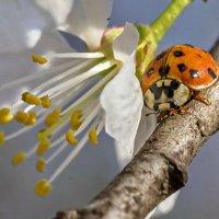 Пора цветения :: Otist
