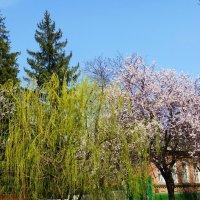 Весна вступила в свои права :: Татьяна Р