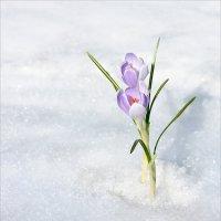 В наш сад пришла весна! :: Olenka