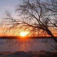 Тихая поступь весны :: владимир тимошенко