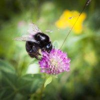 Вкусный цветочек. :: Alexandr Gunin