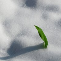 Весна не сдаётся :: Маргарита