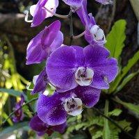 Орхидея :: Alex
