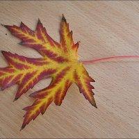 Кленовый листочек :: Нина Корешкова