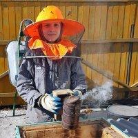 Начинающий пчеловод . :: Мила Бовкун